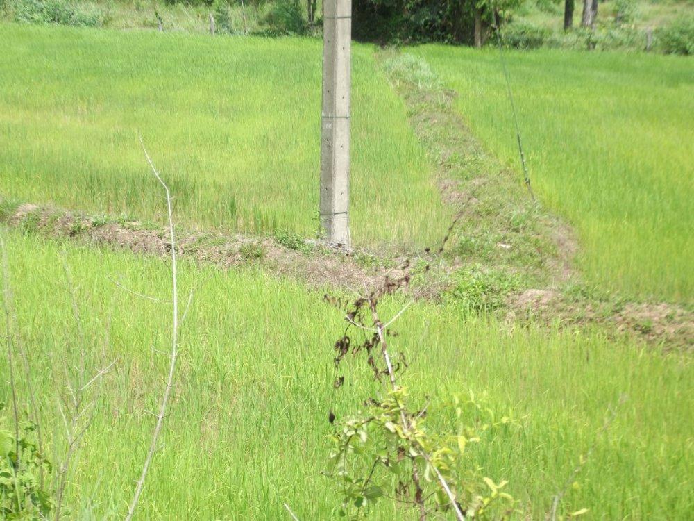 Thailand June 2014 596.jpg