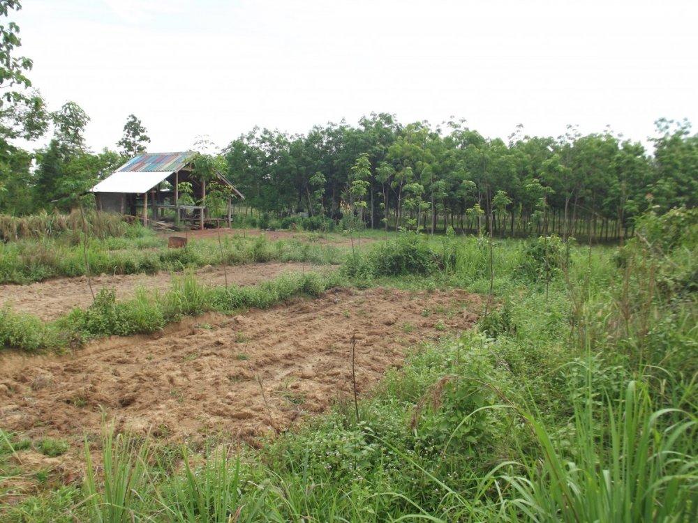 Thailand June 2014 077.jpg